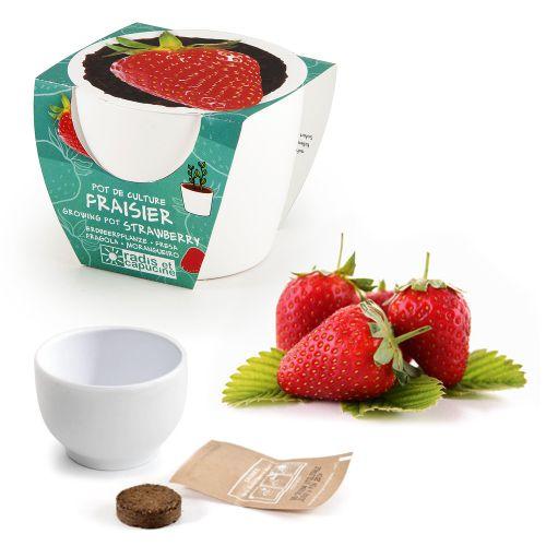 Erdbeere im Mini Keramiktopf
