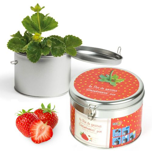 Erdbeere in sch�ner Geschenkdose