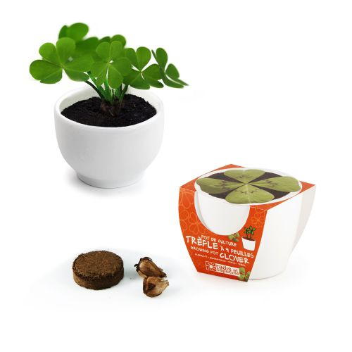 Glücksklee im Mini-Keramiktopf