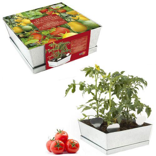 Tomatenbeet im Zinkkasten