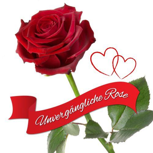 Individuellbesonders - Unvergängliche Rose Das besondere Geschenk - Onlineshop Monsterzeug