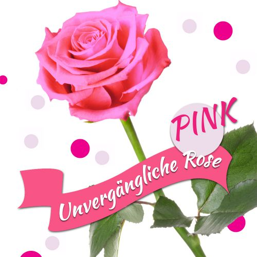 Unverg�ngliche Rose Pink