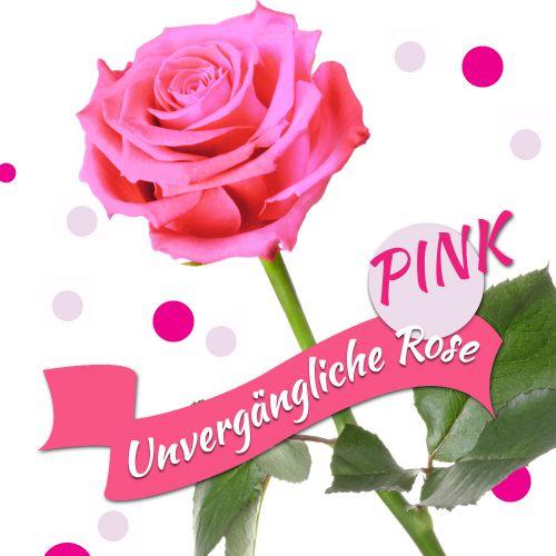 Unvergängliche Rose Pink