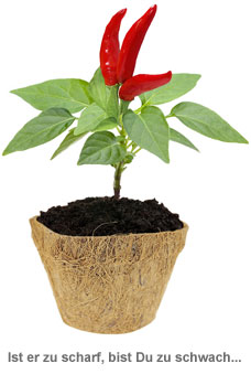 Habanero Chili Set - Selber pflanzen - 2