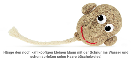 Graskopf Männchen - 2