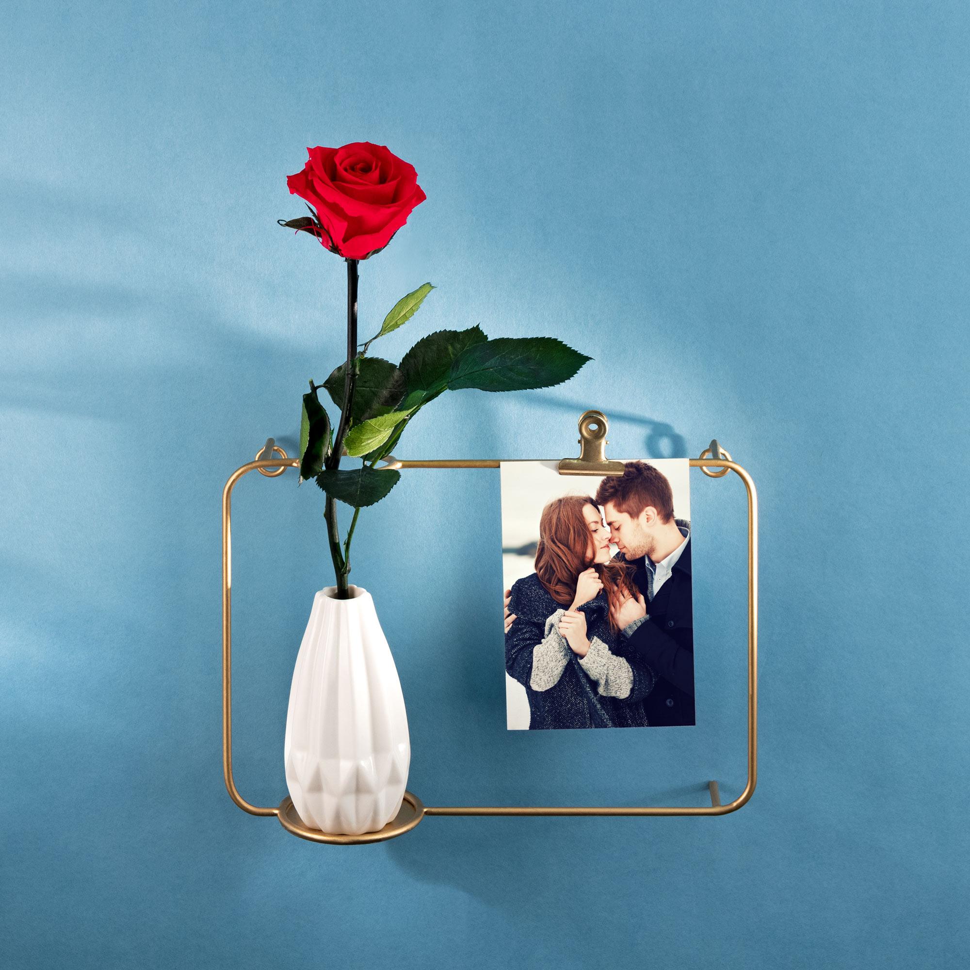 Unvergängliche Rose - Das besondere Geschenk - 2