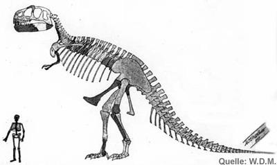 Tyrannosaurus Rex lebensgroß - 5