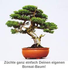 Bonsai Baum Set - Selber pflanzen - 2