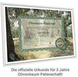 Olivenbaum Patenschaft - 3