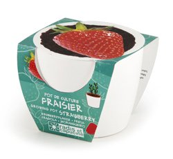 Erdbeere im Mini-Keramiktopf - 3
