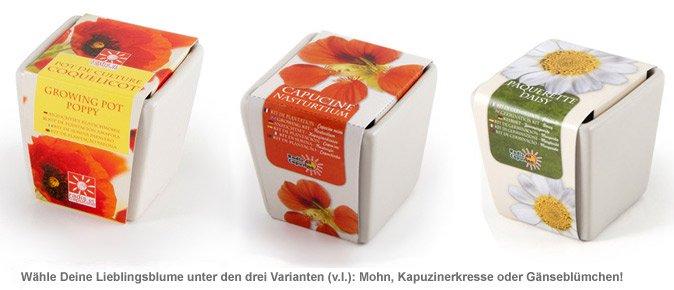 Sommer Blumen im Mini-Keramiktopf - 3