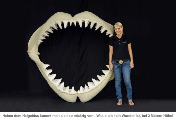 Weißer Hai Angler Trophäe - lebensgroß - 3