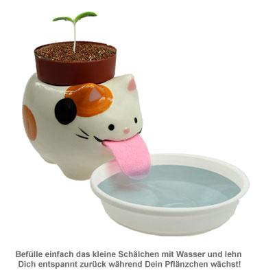 Wilde Erdbeere im Peropon Topf - Katze - 4