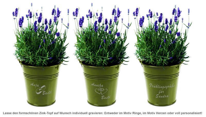 Lavendel im Zink-Topf - 2