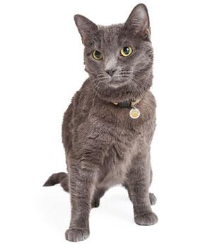 Halsbandanhänger für Hunde und Katzen - Pfote - 3