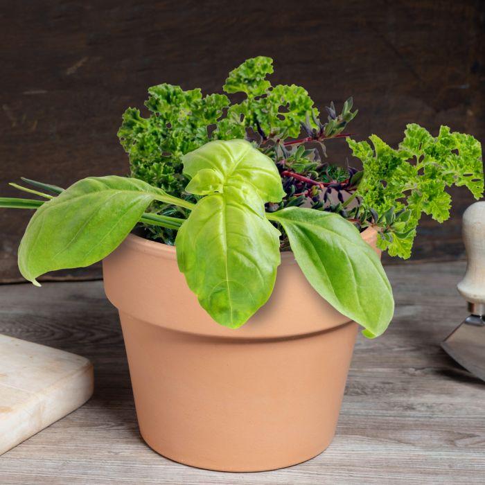 - 10er Blumenset zum Selberpflanzen Kruter der Provence - Onlineshop Monsterzeug