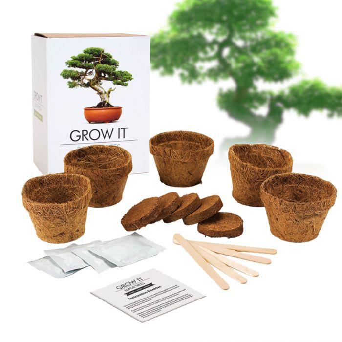 - Bonsai Baum Set Selber pflanzen - Onlineshop Monsterzeug