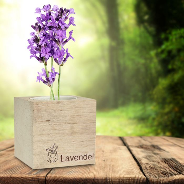 Ausgefallenkleineaufmerksamkeiten - Ecocube Lavendel - Onlineshop Monsterzeug
