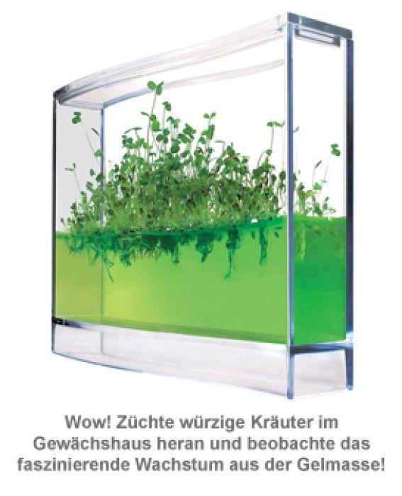 Gel Gewächshaus für Kräuter - Ökosystem