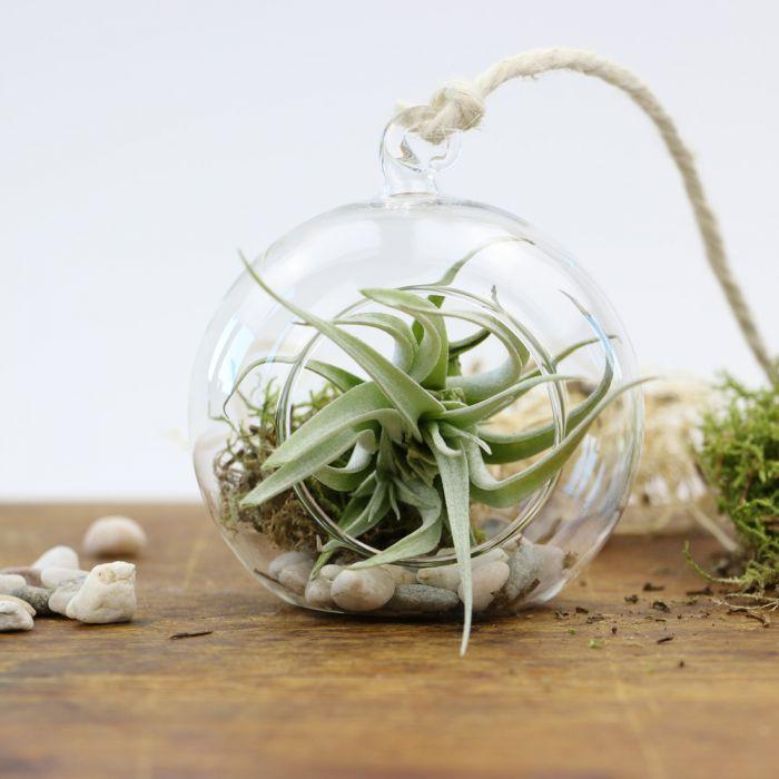 h ngende luftpflanze im glas rund tolles geschenk zum berreichen. Black Bedroom Furniture Sets. Home Design Ideas
