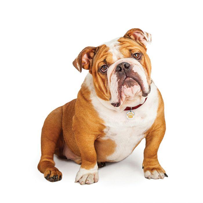 Pendentif pour collier de chien et de chat patte - Image patte de chien gratuite ...