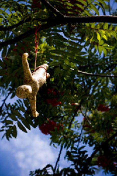 Vogelfutter - Bungee Jumping