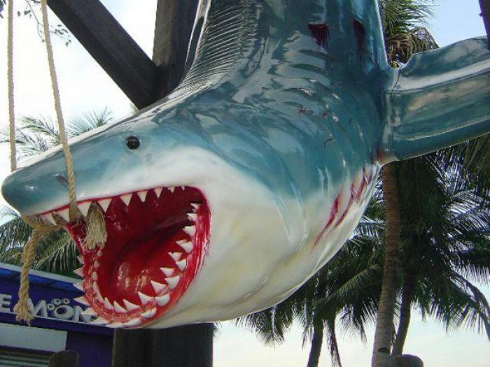Requin blanc en taille réelle - trophée de pêcheur