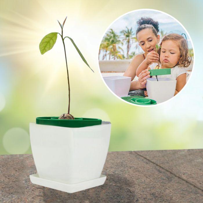 Gut bekannt 3-teiliges Pflanzset - Avocadokern einpflanzen - ganz einfach AD61