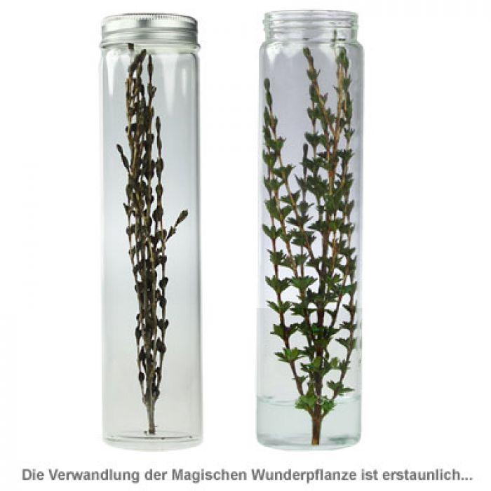 Magische Wunderpflanze