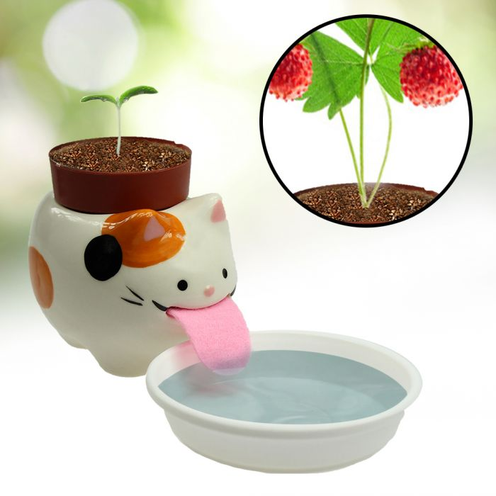 Wilde Erdbeere im Peropon Topf - Katze