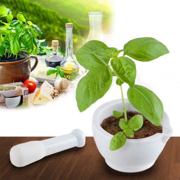 Pesto zum Selbermachen