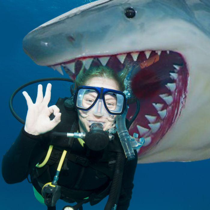 Weißer Hai Angler Trophäe - lebensgroß