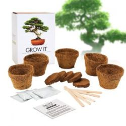 Set arbre bonsai - planter soi-même