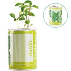 Plante en boîte