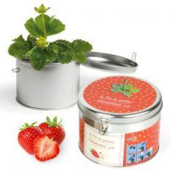 Erdbeere in schöner Geschenkdose