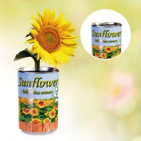 Dosenpflanze Sonnenblume