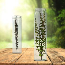 Plante miracle magique