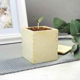 Plante magique romantique  Canavalia damour