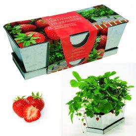 Erdbeeren im Zink Blumenkasten