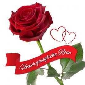 Unvergngliche Rose - Das besondere Geschenk