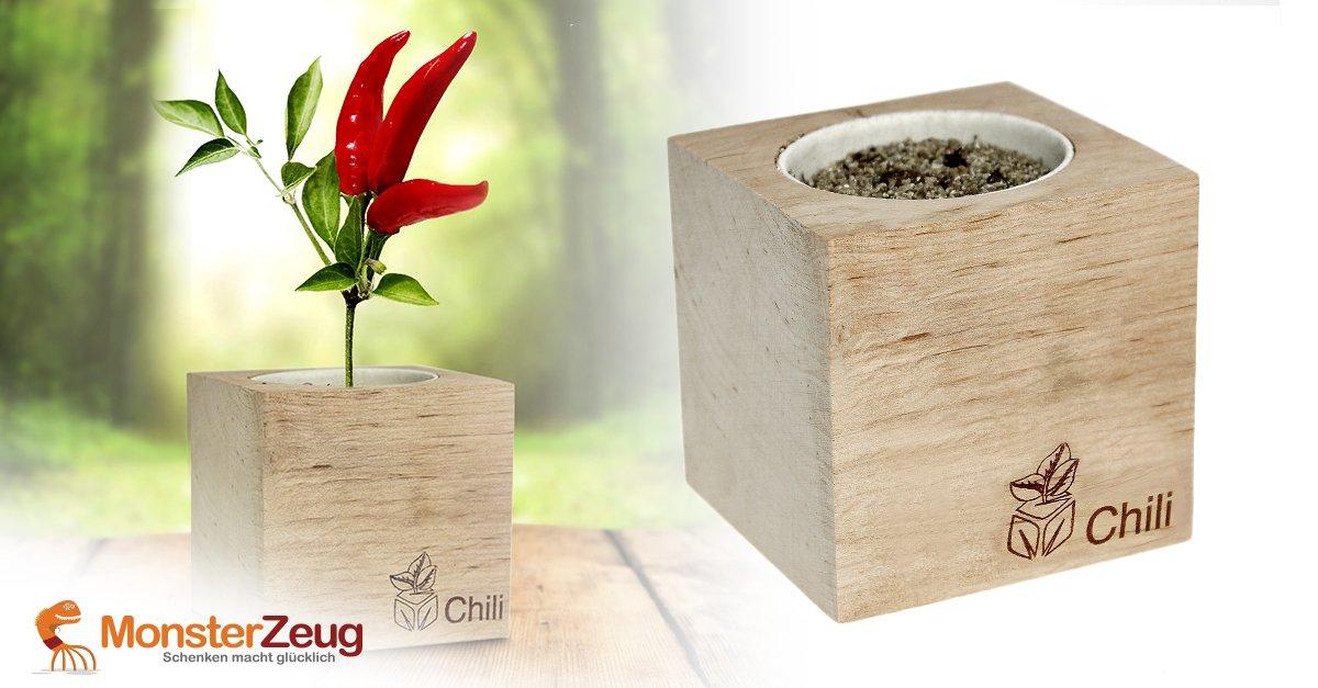 Chili züchten